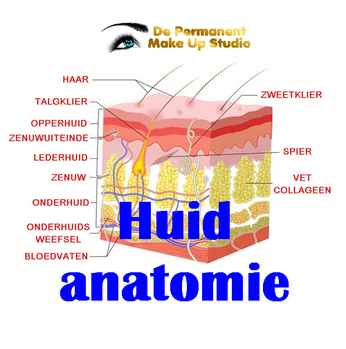 Permanent make up en Huid anatomie